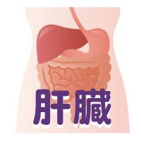 赤ら顔 肝臓