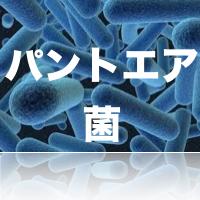 パントエア菌