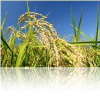 米発酵化粧品